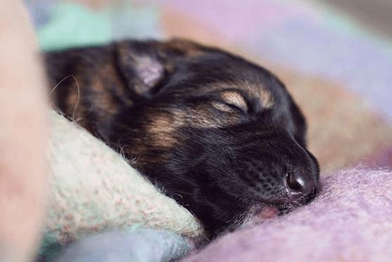 щенок, кропать, сон