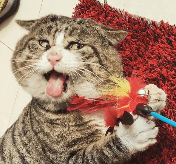 кошка, перья, швабра, домашнее животное