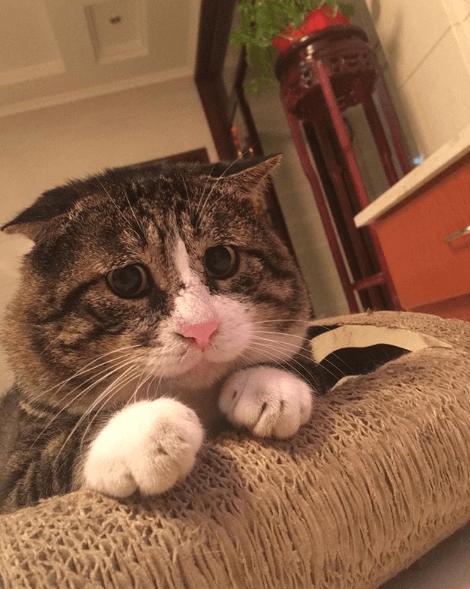 кошка, диван, питомец, дом