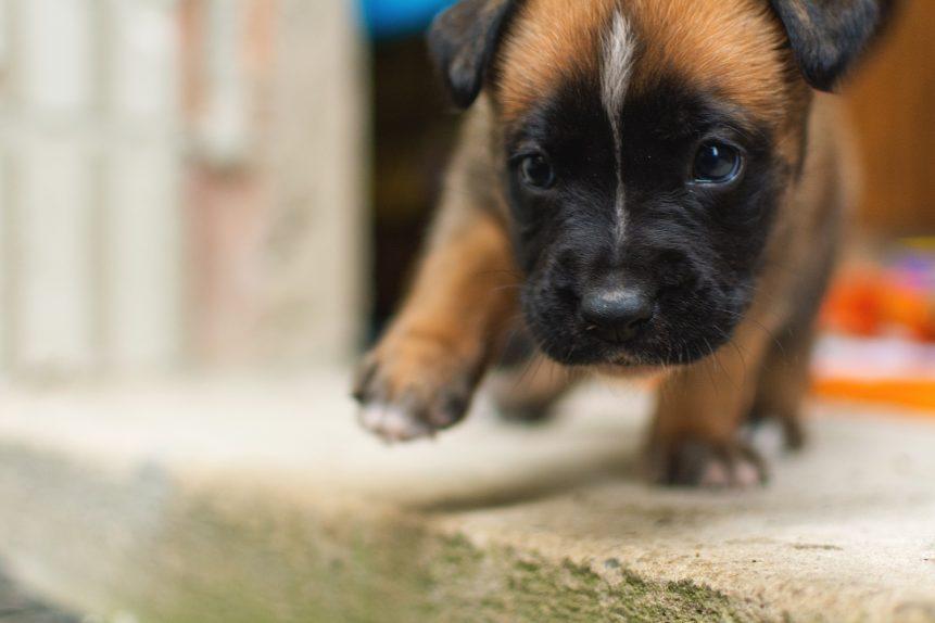 Маленький щенок крупным планом фото