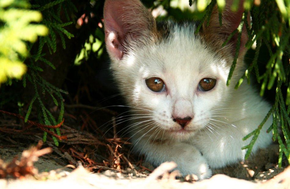 Котенок в зарослях фото
