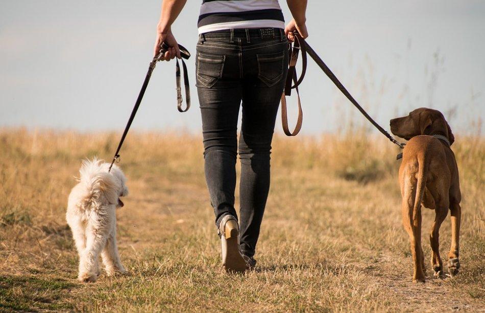 женщина гуляет с двумя собаками по полю фото
