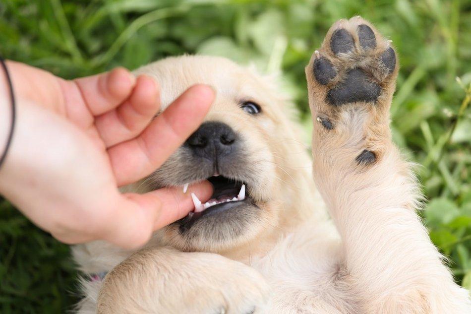 картинки собаки кусаются подобранные линзы как