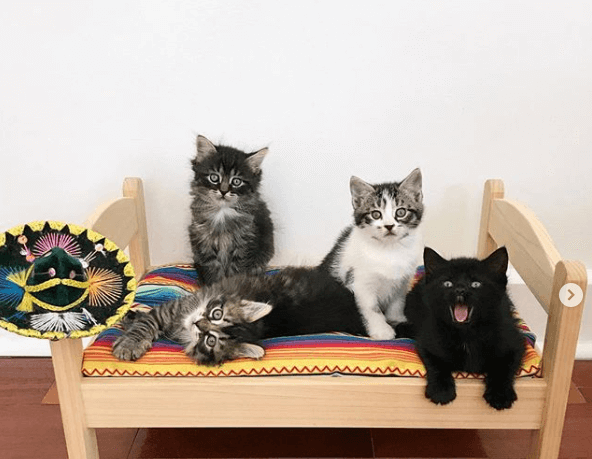 котята, кровать, постель, шапка, дом