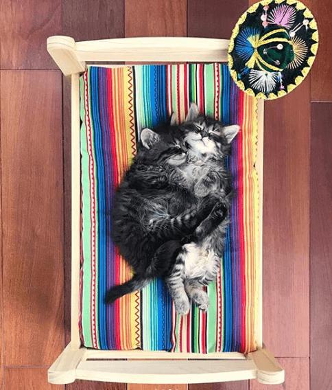котята, сон, объятия, кровать, дом, шляпа
