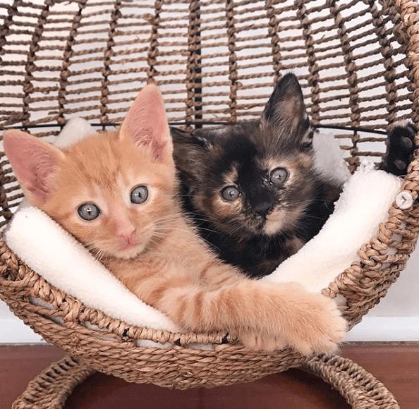 котята, корзинка, переноска, дом