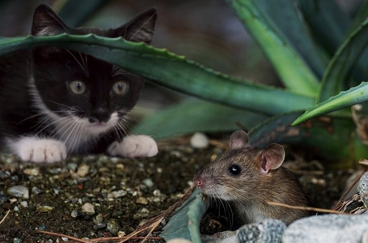 кошка, мышка, алоэ, животные