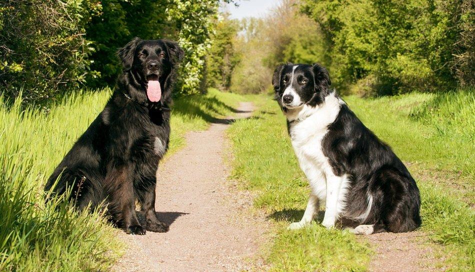 Две собаки на лесной тропинке фото