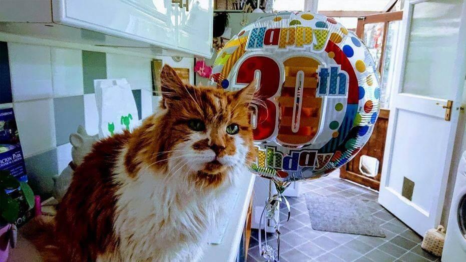 кошка, мейн кун, день рождение, шарик, клиника