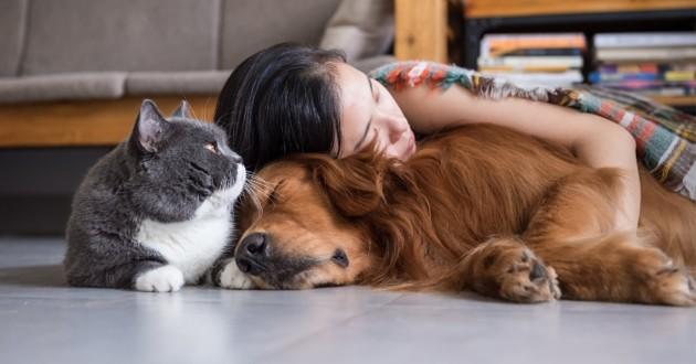 кошка, собака, девушка, сон