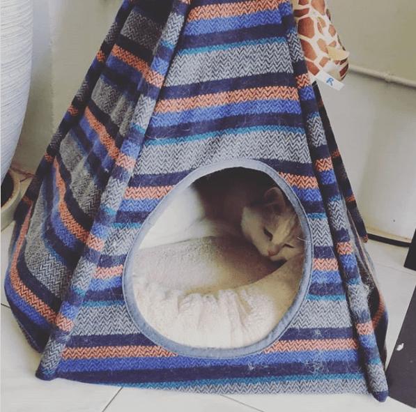 место для кота, лежанка, домик кошки, питомец