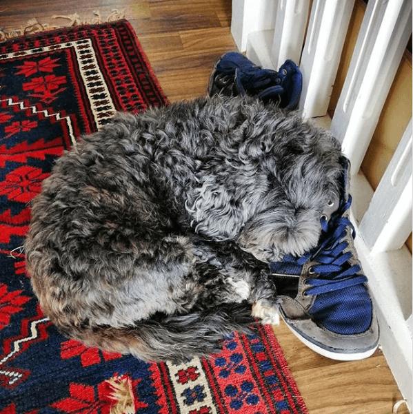 собака, ботинок, одиночество, домашний питомец