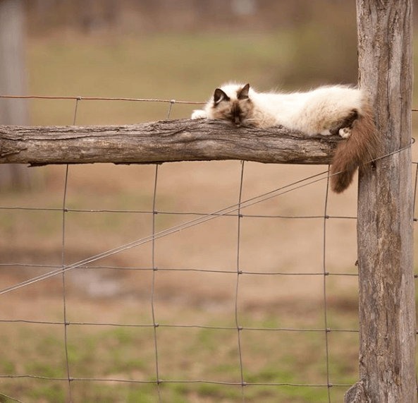 кошка, сон, ветка, дерево, улица, забор