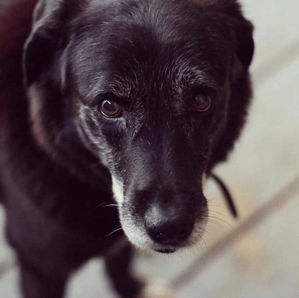 пес, собака, домашний питомец, животное, приют