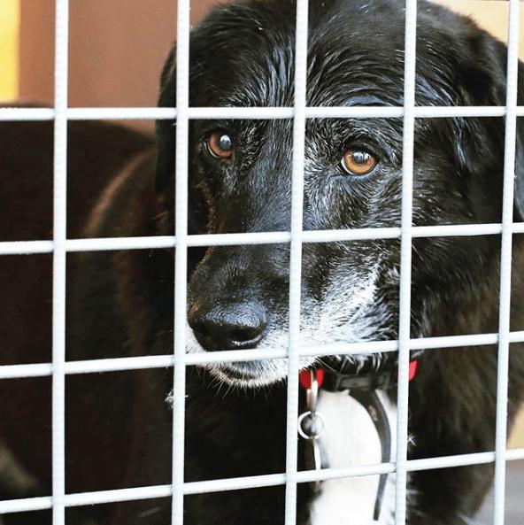 собака, клетка, приют, дворняжка