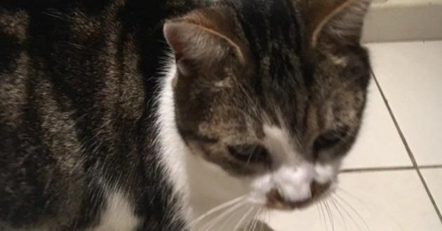 кошка, домашнее животное, питомец