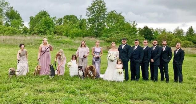 свадьба, гости, жених и невеста, собаки, цветы, дети