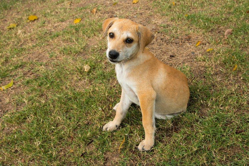 Рыжий щенок дворняжки сидит на траве фото