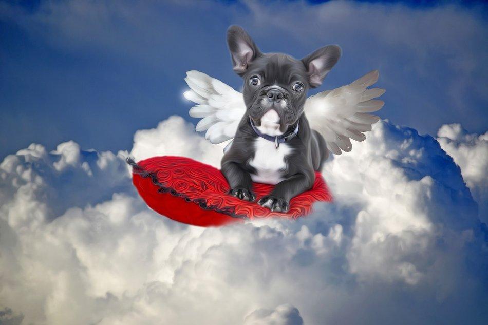 Бульдог собака в виде ангела фото