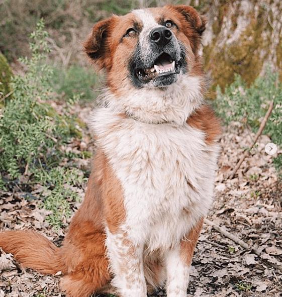 четвероногий друг, пес, домашний любимец