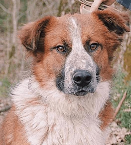 собака, лучший друг, пес, дворняга