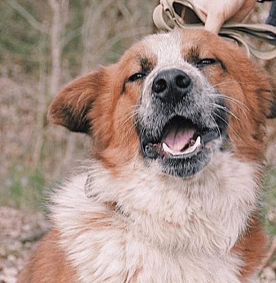 друг семьи, собака, двортерьер, питомец
