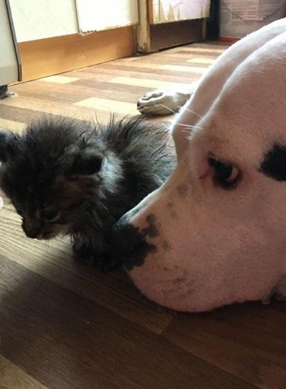 кошка, собака, дом