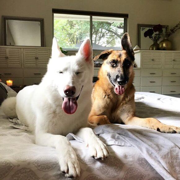 собаки, кровать, дом