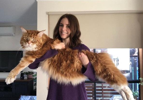 огромный кот, дом, хозяйка