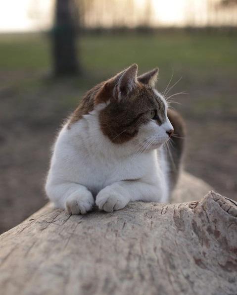 кошка, деревня, дерево, домашнее животное