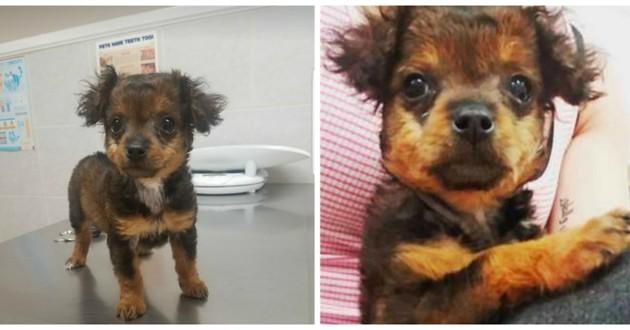 щенок, собака, домашний питомец, ветеринарная клиника