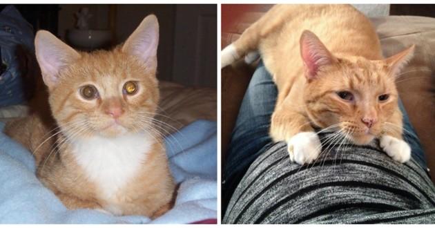 котенок, кошка, домашний питомец