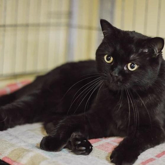 черный кот, домашнее животное, питомец