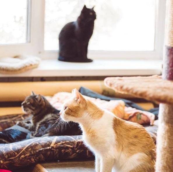 кошки, комната, приют