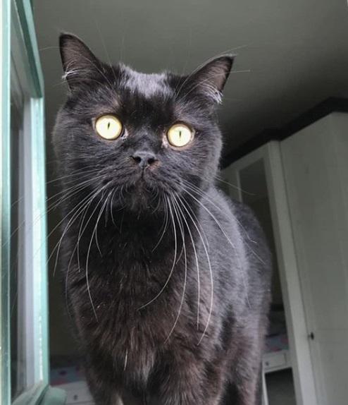 кошка, окно, дом