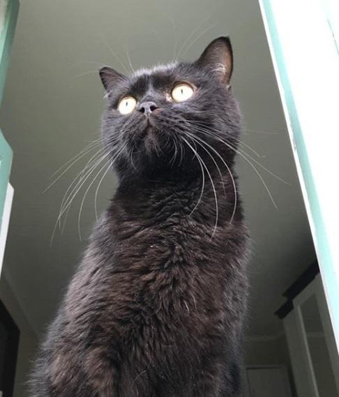 кот, животное, дом, окно