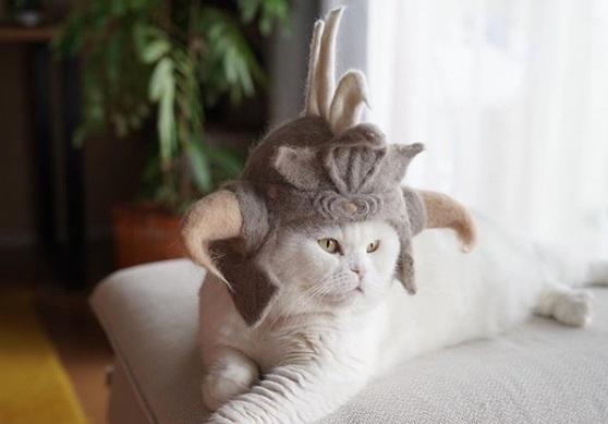 кошка, шотландская вислоухая, шляпа