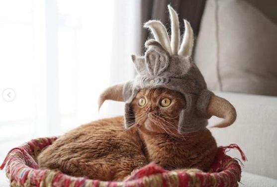 кошка, шапка, лежанка
