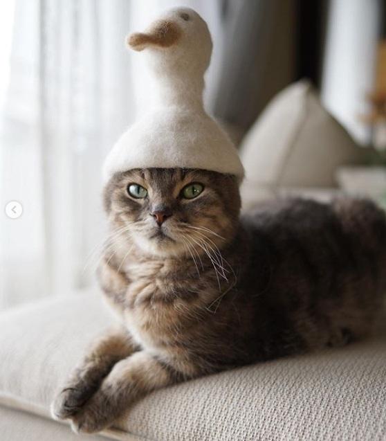 кот, утка, шапка, питомец