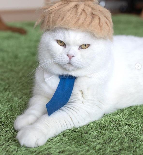 кошка, парик, Борис Джонсон