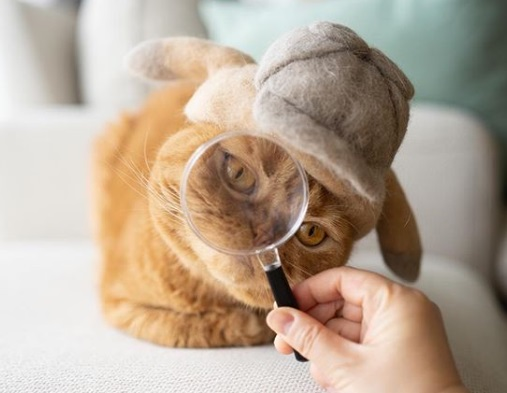 кошка, шапка, Шерлок Холмс