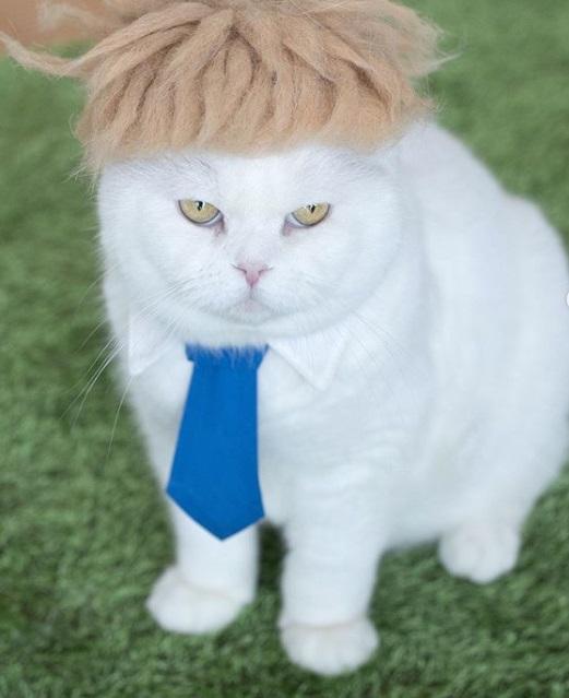 кот, животное, премьер-министр Великобритании