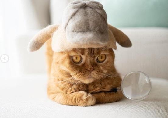 кошка, лупа, детектив, головной убор