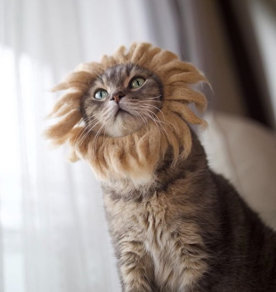 кошка, король-лев, парик