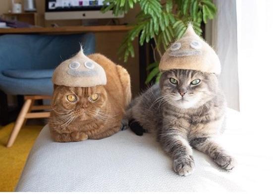 кошки, шотландская вислоухая, смайлики, эмоджи