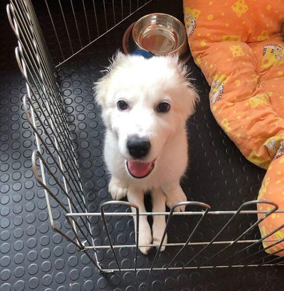 метис алабая, собака, щенок, вольер, миска