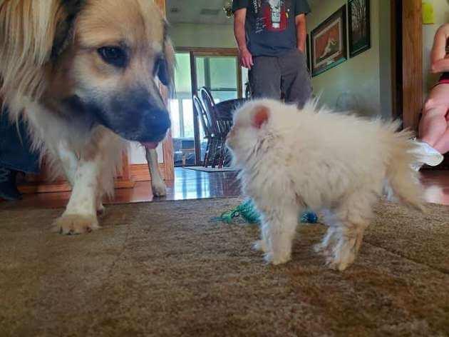 собака и кошка, домашнее животное, первое знакомство
