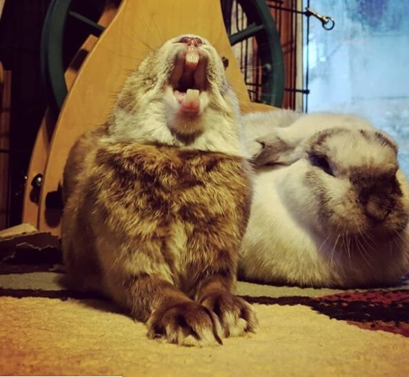 кролики, дом, пол, ковер