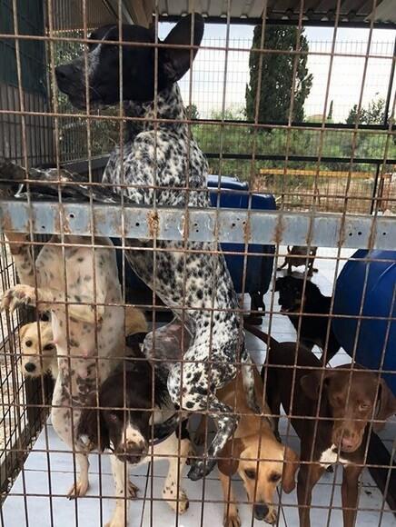 собаки в приюте, клетка, вольер, Кипр