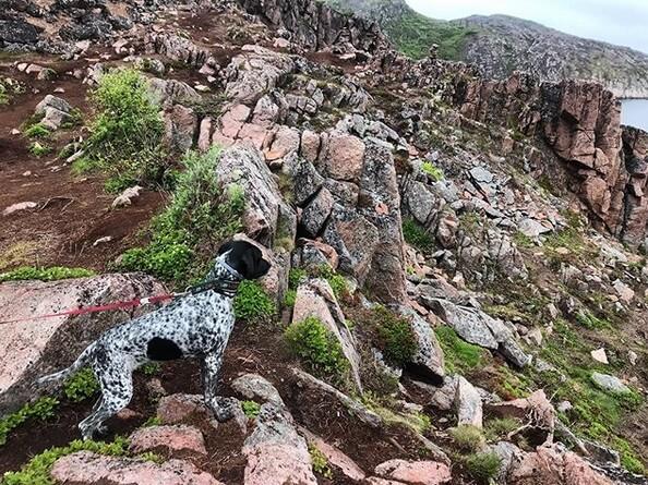 собака, природа, скалы, море, горы, Мурманск
